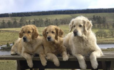 Gigha with her Daughters, Muck & Bute