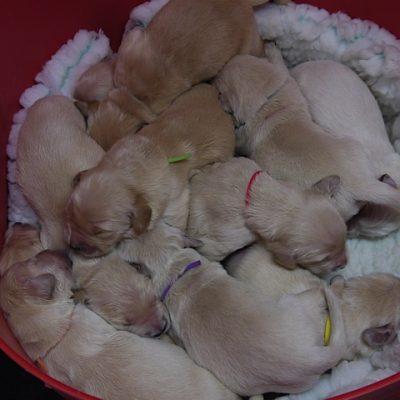 Gunna x Finn Pups March 2015