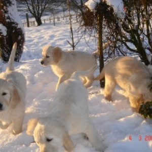Pups from Paddy & Sula's litter 2008