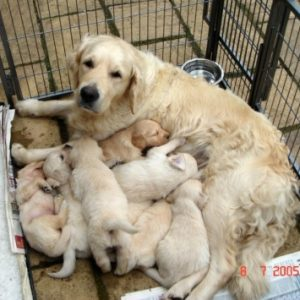 Pups from Doyle & Gigha's litter 2005