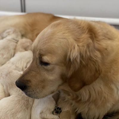 Jura & Pups 2019